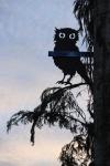 Owl time